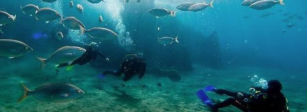 Más de 100.000 turistas practicaron buceo durante el pasado año en Lanzarote según desvela un estudio del Centro de Datos