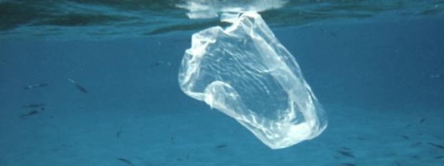 La campaña «Plástico Cero» de la Reserva de la Biosfera presente en varios eventos de la isla con motivo del Día Mundial del Medio Ambiente