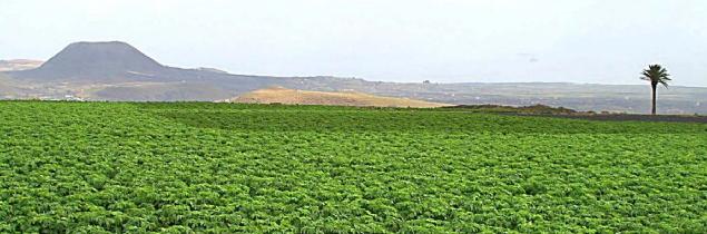 Jornadas sobre Agricultura, Salud y Alimentación