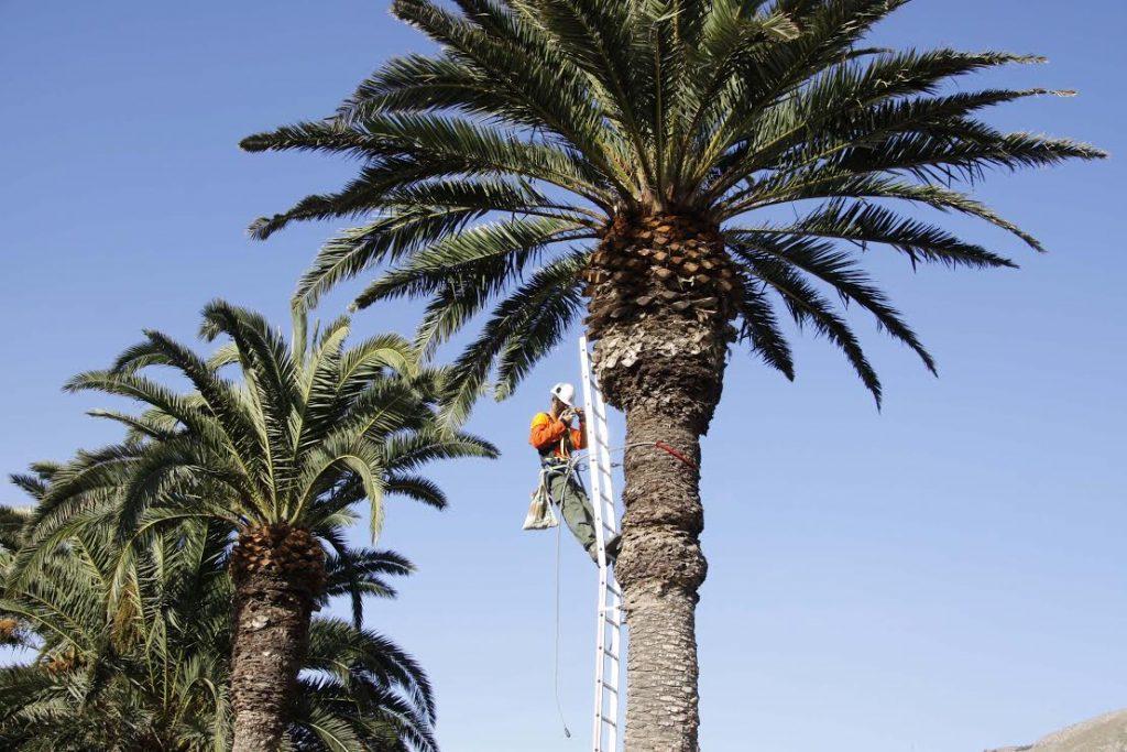 El Cabildo de Lanzarote destina 180.000 euros para recuperar espacios naturales de la isla