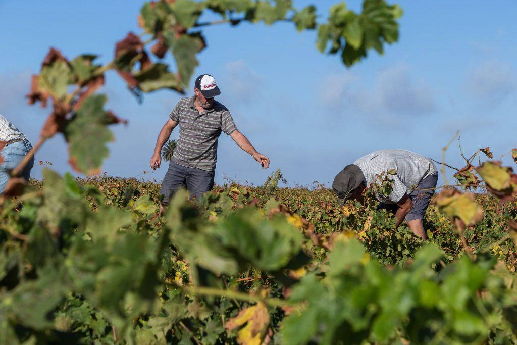 Las bodegas Malpaís de Máguez y Vega de Yuco «Medallas de Oro» en el Concurso Nacional Vino Supremum