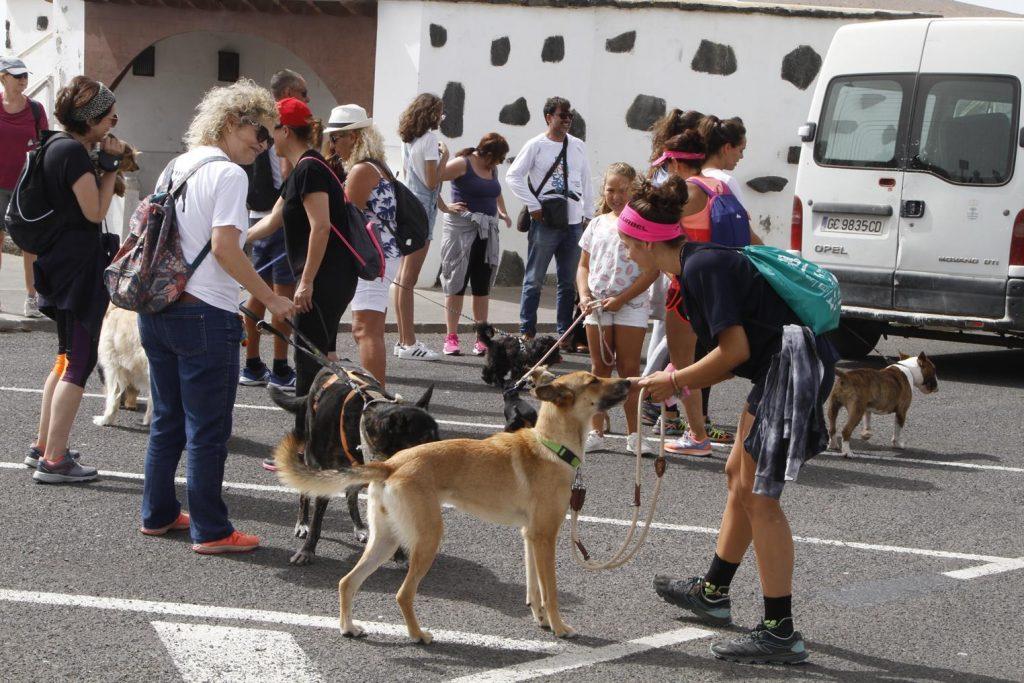 Teguise celebra una nueva adopción durante la caminata contra el abandono de animales