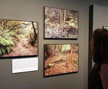 Prorrogada en la Casa de Colón, Gran Canaria, la exposición sobre  los paisajes de la laurisilva de Canarias