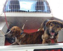 Teguise lamenta el incremento considerable de los casos de abandono animal