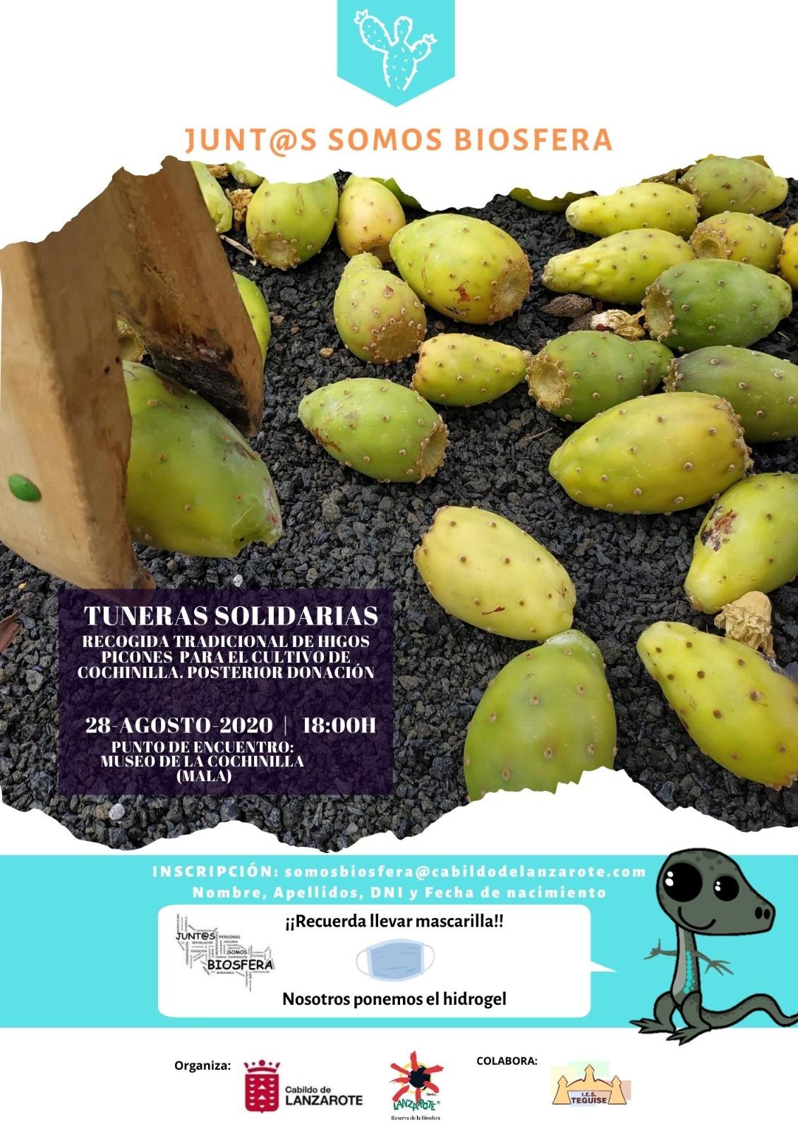 Tuneras Solidarias, una acción para acercar la cultura de la cochinilla a la población