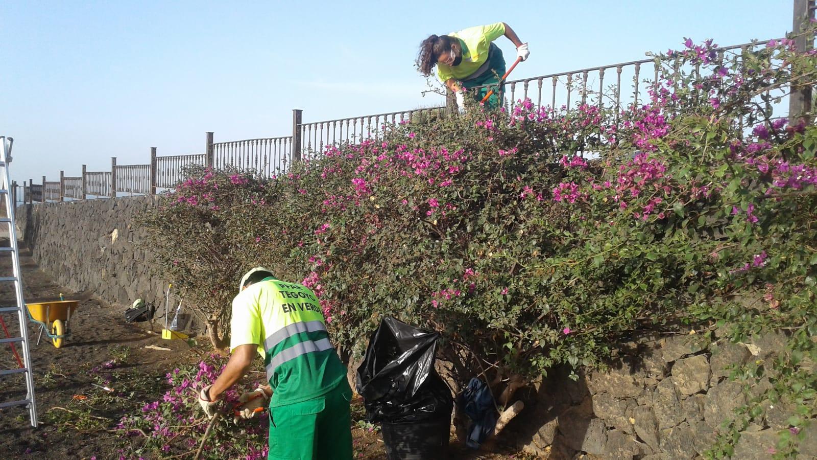 Los planes de empleo de Tías permiten que 45 personas mejoren la jardinería, construcción y limpieza del municipio