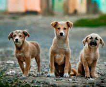 El Cabildo insta al Gobierno autonómico a tramitar una nueva Ley de Bienestar Animal
