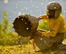 Filmoteca proyecta 'Honeyland', una historia sobre el frágil equilibrio entre la naturaleza y la humanidad