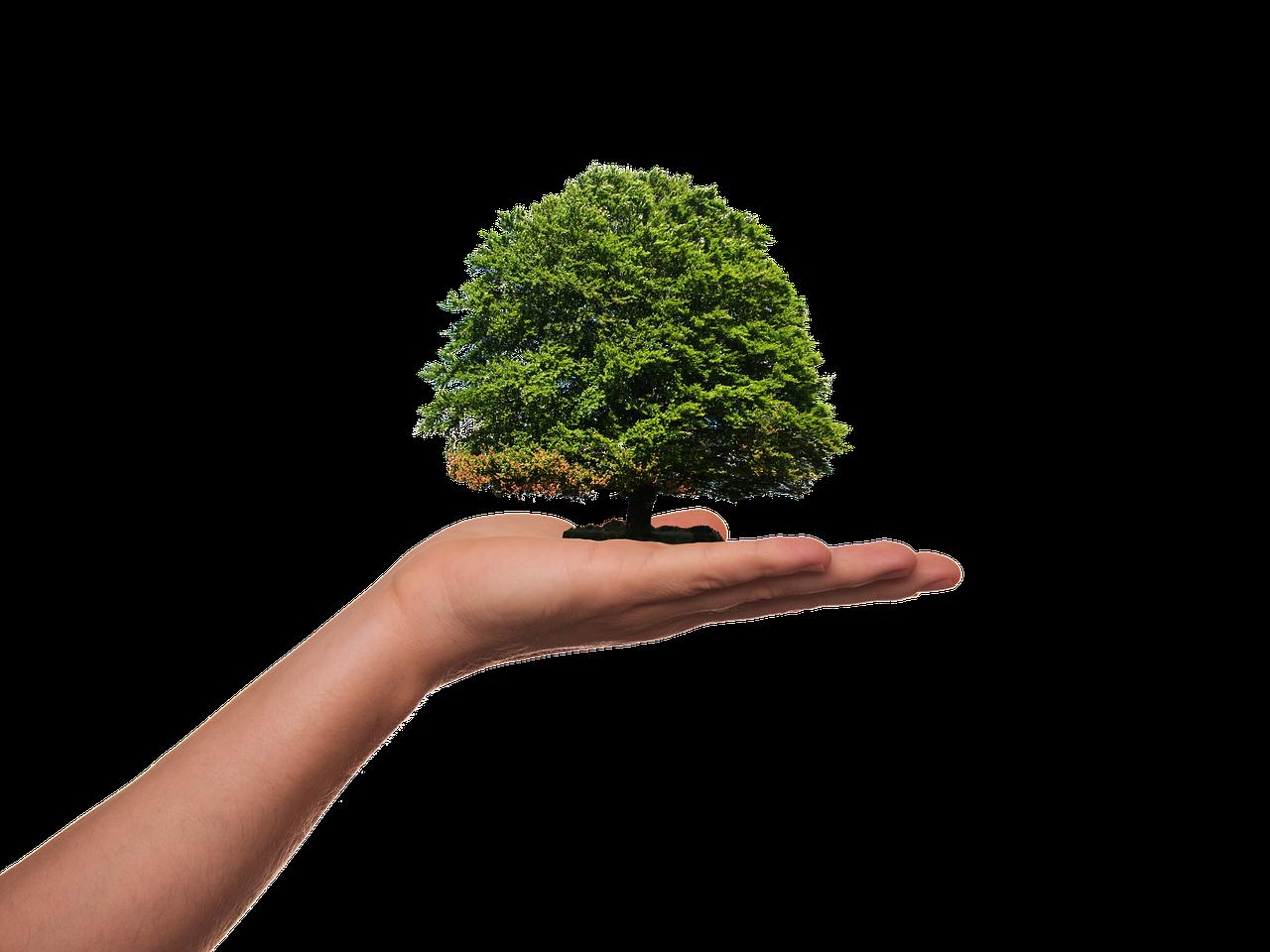 El Gobierno de Canarias realiza un estudio de opinión pública sobre transición ecológica y cambio climático