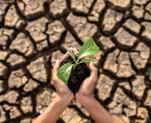 Canarias participará en una cumbre virtual de las RUP sobre estrategia climática y biodiversidad