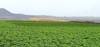 El Cabildo de Lanzarote dota al sector primario lanzaroteño de una nueva máquina destinada a triturar los residuos vegetales para la posterior elaboración de compost ecológico