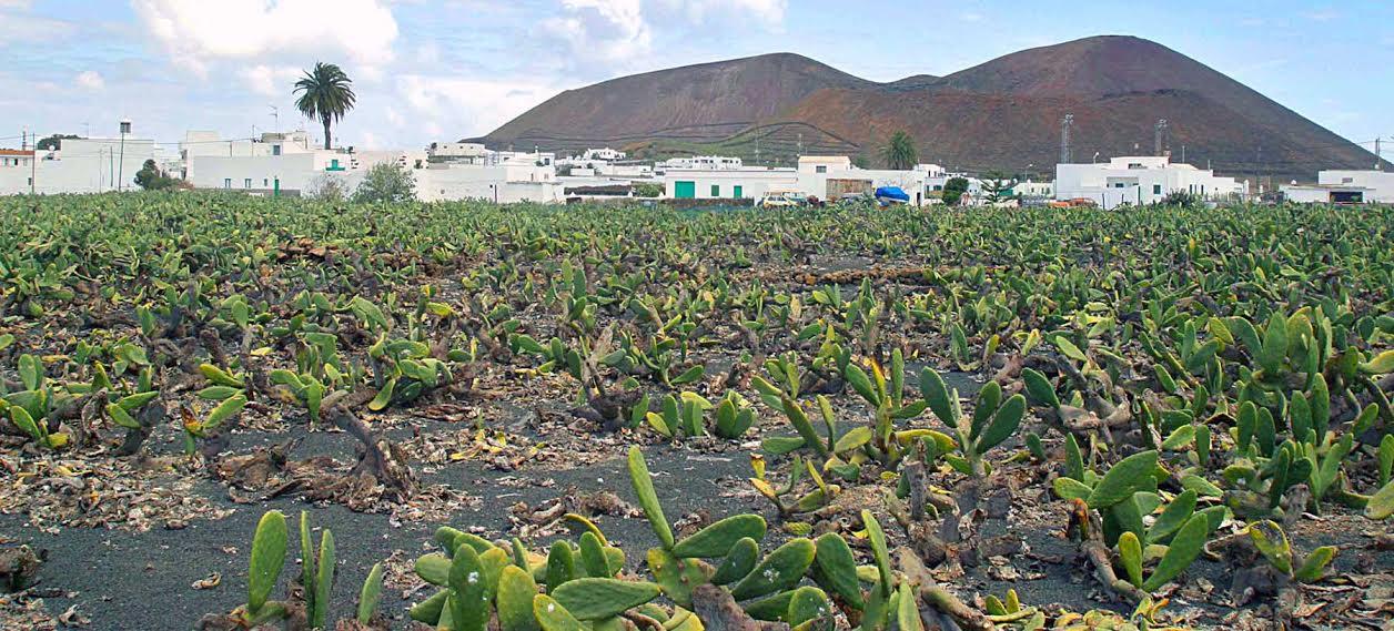 """Actividad formativa online """"Iniciación al cultivo de la tunera o nopal. Manejos y Usos"""""""