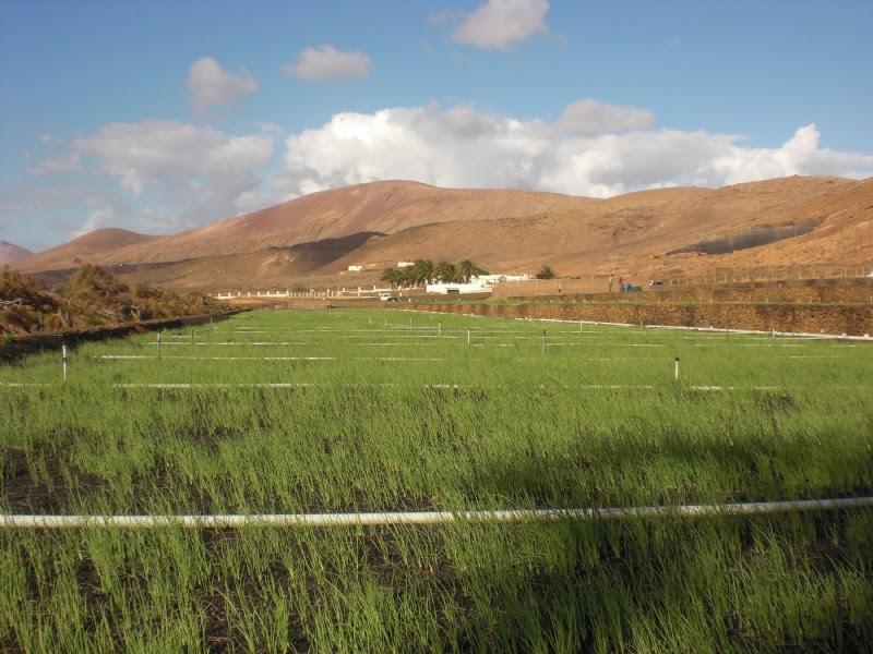 La Granja abre el plazo para retirar los canteros de cebollinos y semillas de variedades locales