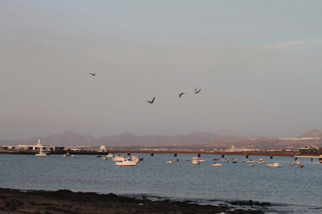 El Ayuntamiento de Arrecife ayuda a descubrir y apreciar la riqueza medioambiental del municipio