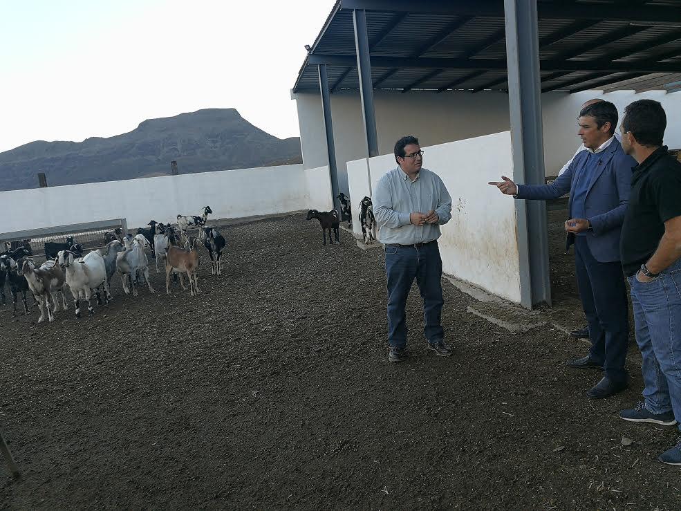 Canarias protege su cabaña caprina regulando el protocolo de vacunación de la paratuberculosis
