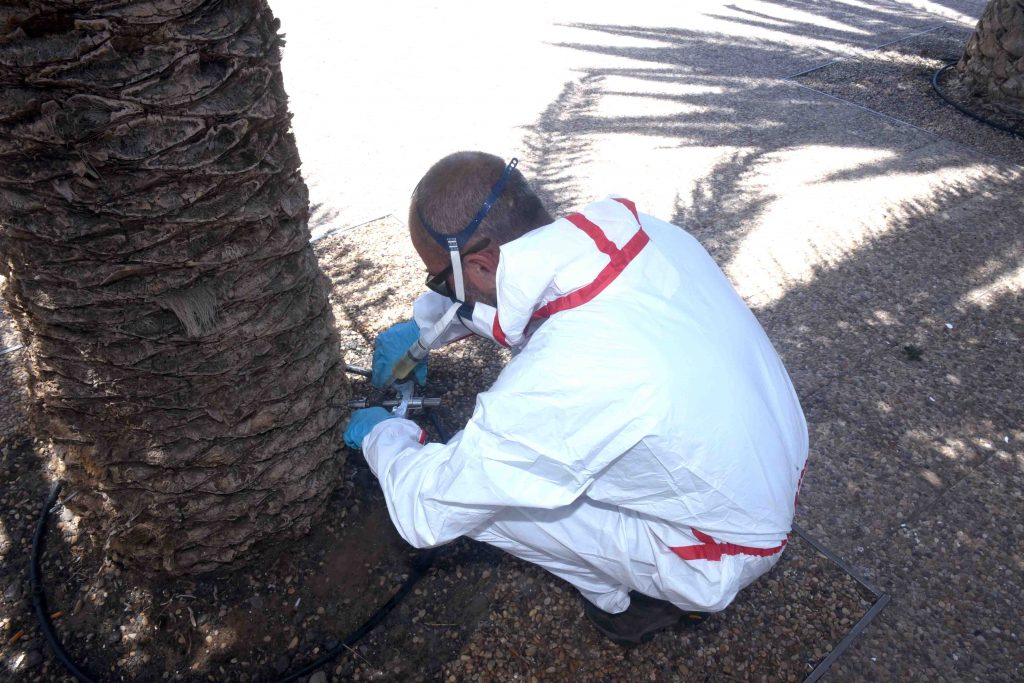 El Ayuntamiento de San Bartolomé comienza a aplicar el tratamiento de endoterapia a las palmeras de la Avenida de Playa Honda