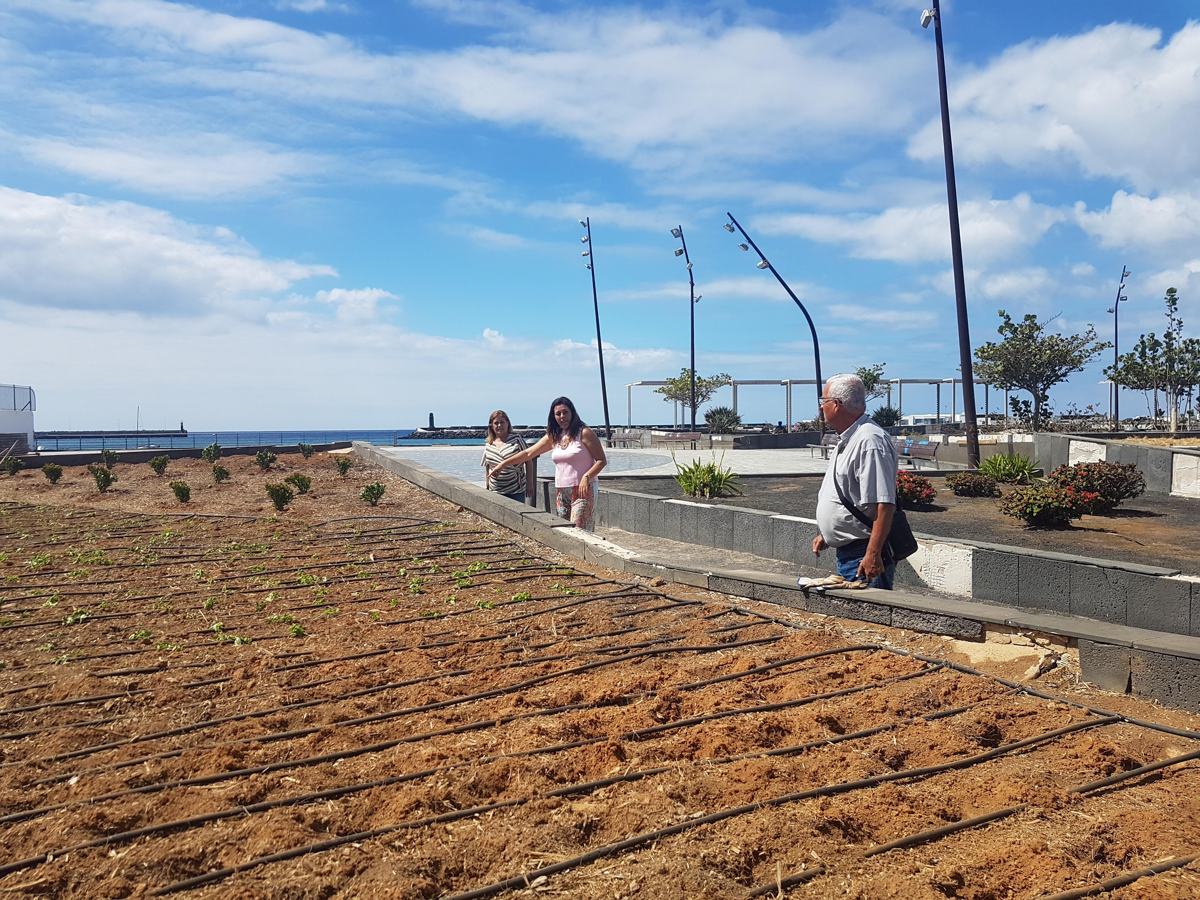 El Gobierno de Arrecife pone en marcha la recuperación de los jardines y zonas verdes del Parque Islas Canarias