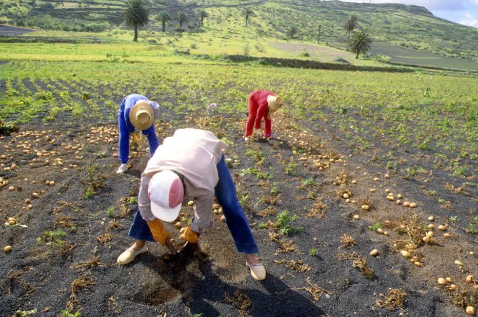 Vanoostende confirma que Canarias recibirá antes de final de año las ayudas estatales para el agua de riego