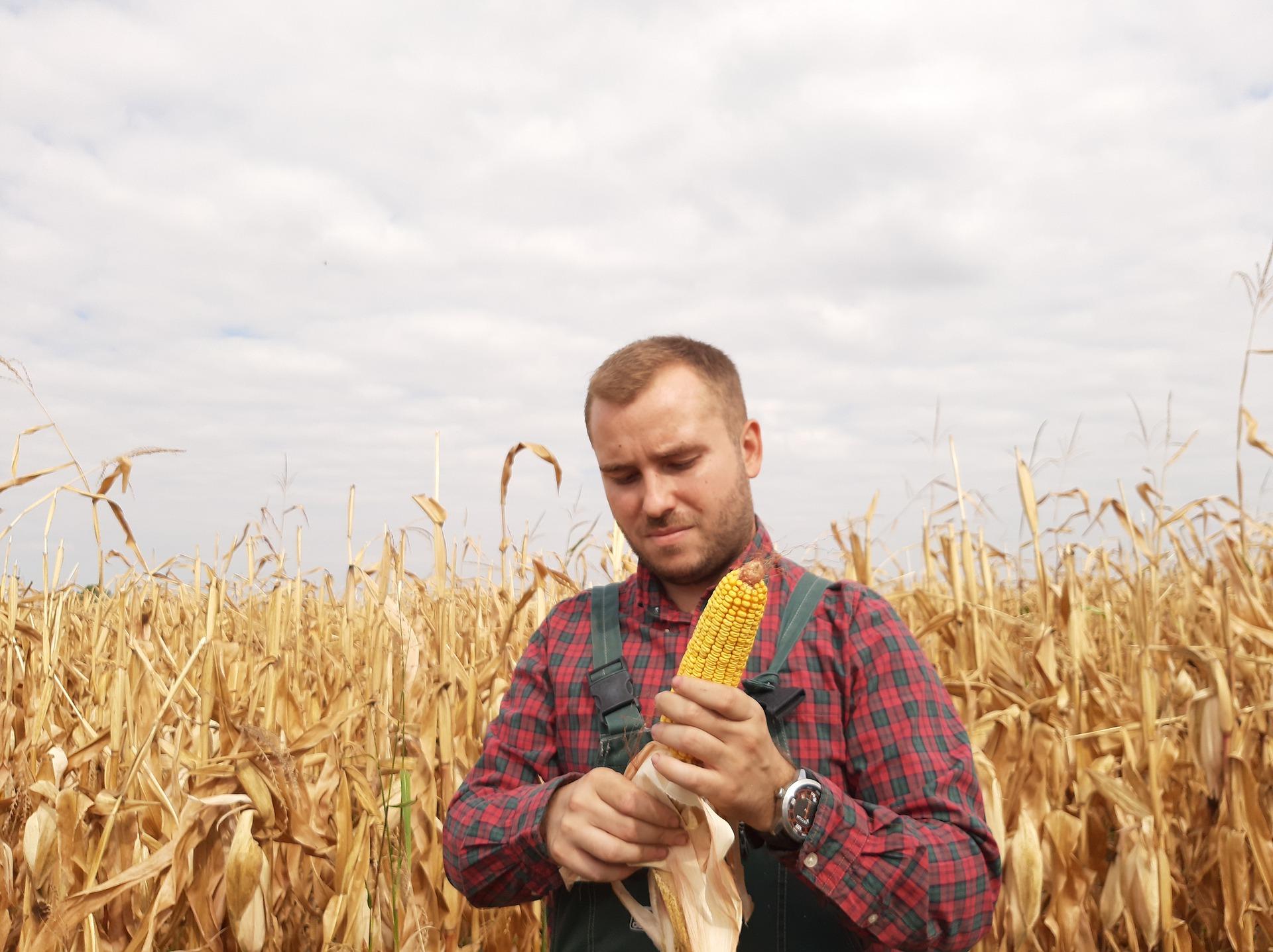 Subvenciones 2021, destinadas a apoyar la creación de empresas por jóvenes agricultores