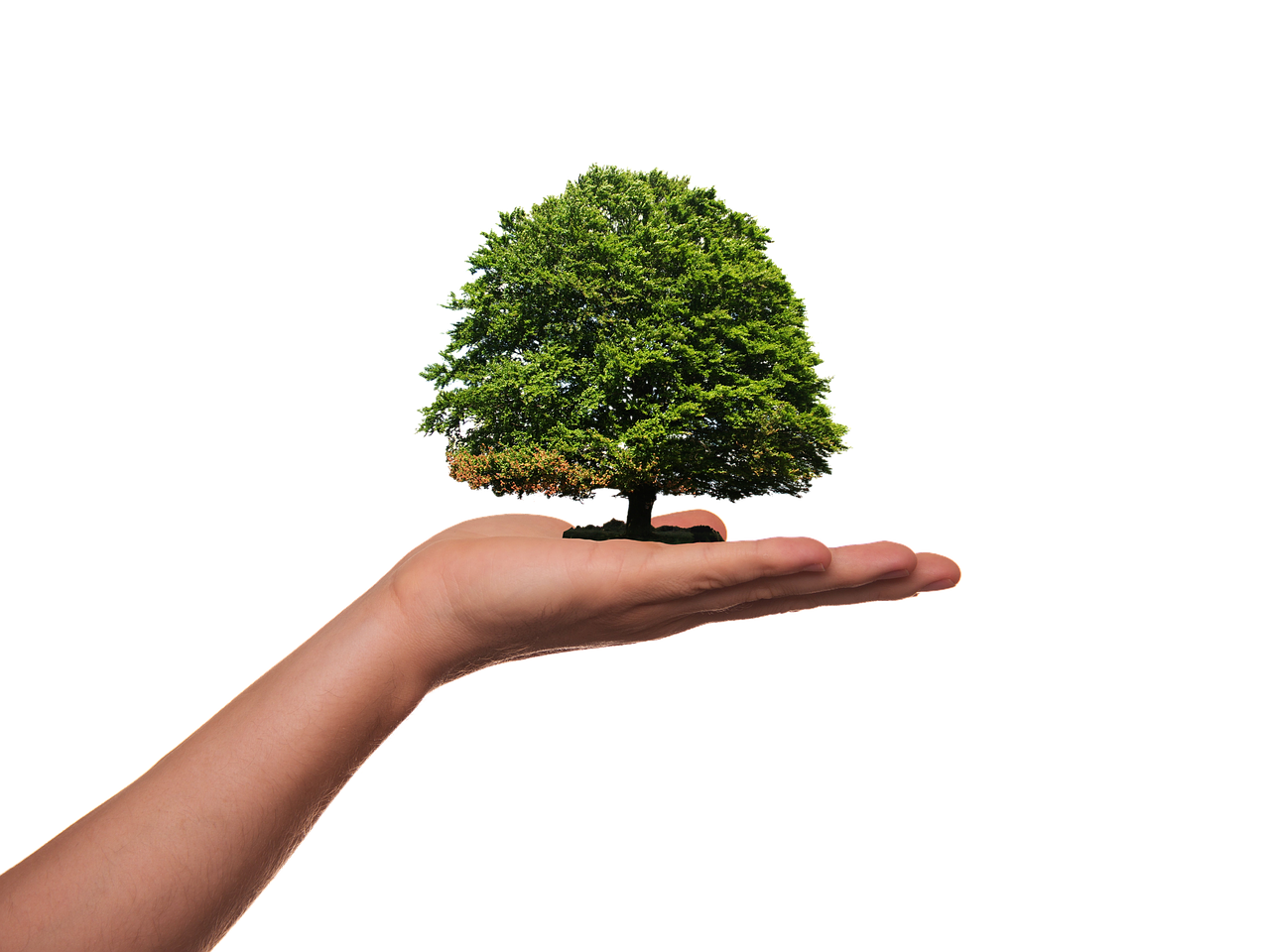 El Gobierno comparte con ayuntamientos y cabildos el anteproyecto de Ley de Cambio Climático
