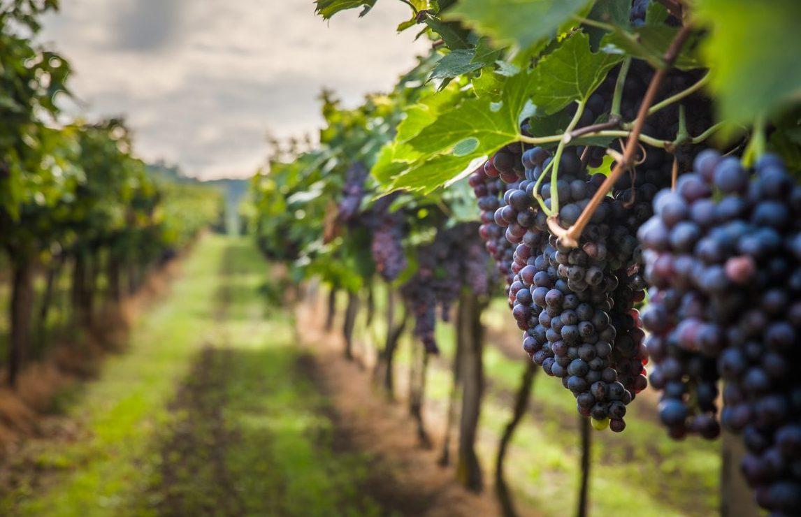 Seminario on-line de Viticultura de Precisión
