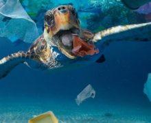 Polución por plásticos, de macroplásticos a nanoplásticos: MICRO 2020′