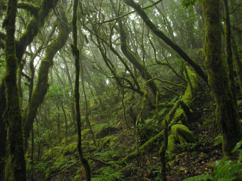 El Gobierno de Canarias destina 510.000 euros a las entidades de gestión de las Reservas de la Biosfera