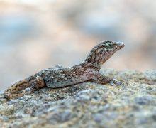 El Banco de Datos de la Biodiversidad de Canarias supera las 24.400 especies registradas