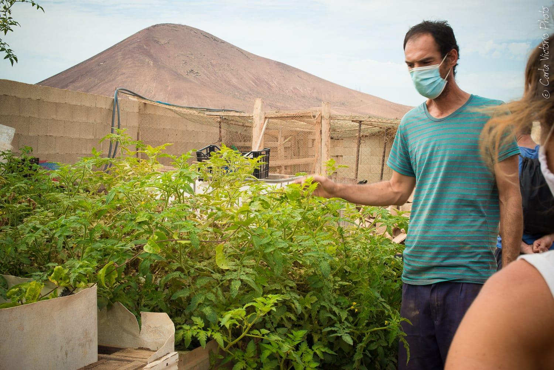 La cosecha de los huertos comunitarios de Tías se destinará a Servicios Sociales, banco de semillas y participantes