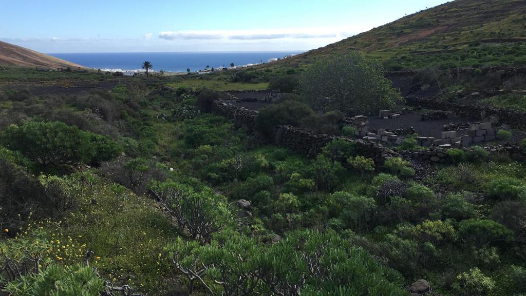 Ecologistas en Acción de Lanzarote denuncia las obras con maquinaria pesada en el Barranco de Temisa en época de nidificación