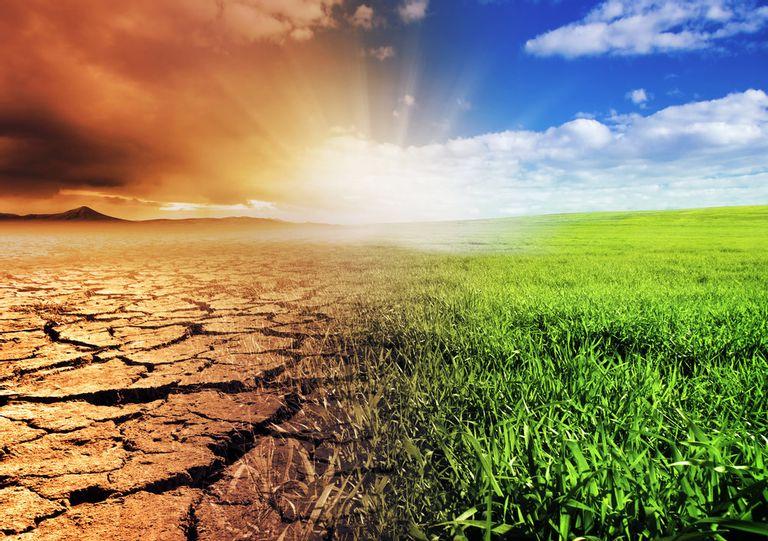 El Cabildo fomenta la creación de empleo a través de un proyecto de lucha contra el cambio climático
