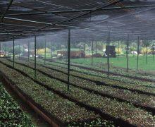 Transición Ecológica imparte un curso virtual y gratuito sobre forraje verde hidropónico