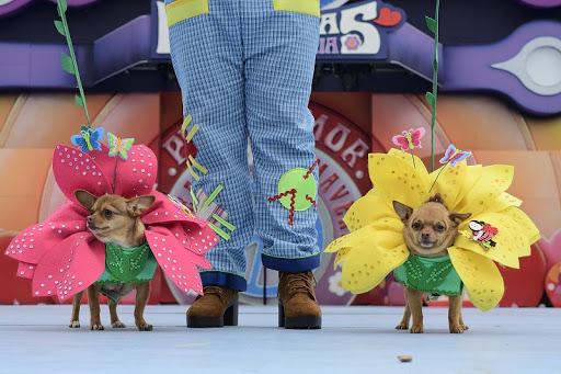 Concurso Cannaval Teguise 2021