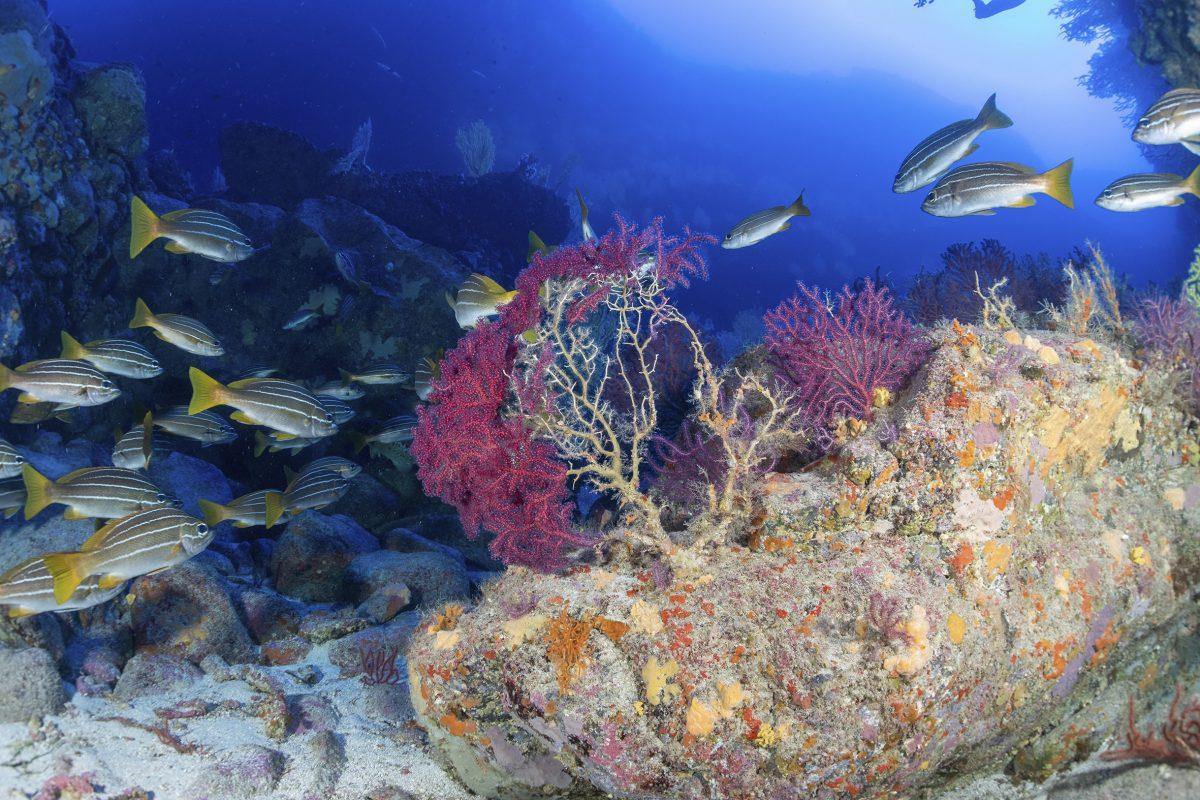 El Gobierno de Canarias impulsa el estudio de los ecosistemas marinos profundos de la Macaronesia