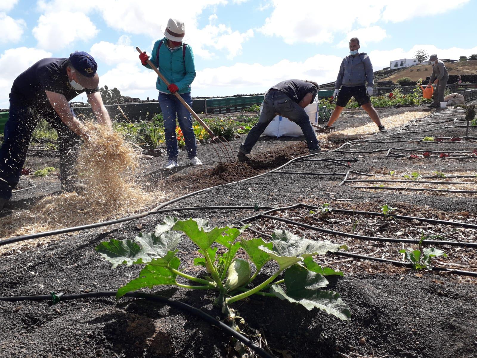 Una veintena de voluntarios 'cultivan futuro'