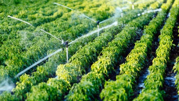 El área de Agricultura invita a la población de Haría a participar en talleres para impulsar el empleo en el medio rural