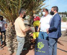 Yaiza inicia tratamiento de endoterapia en 300 palmeras del municipio