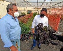 El cabildo colabora con el IES Teguise para impulsar la formación en cultivos ecológicos y recuperar variedades locales