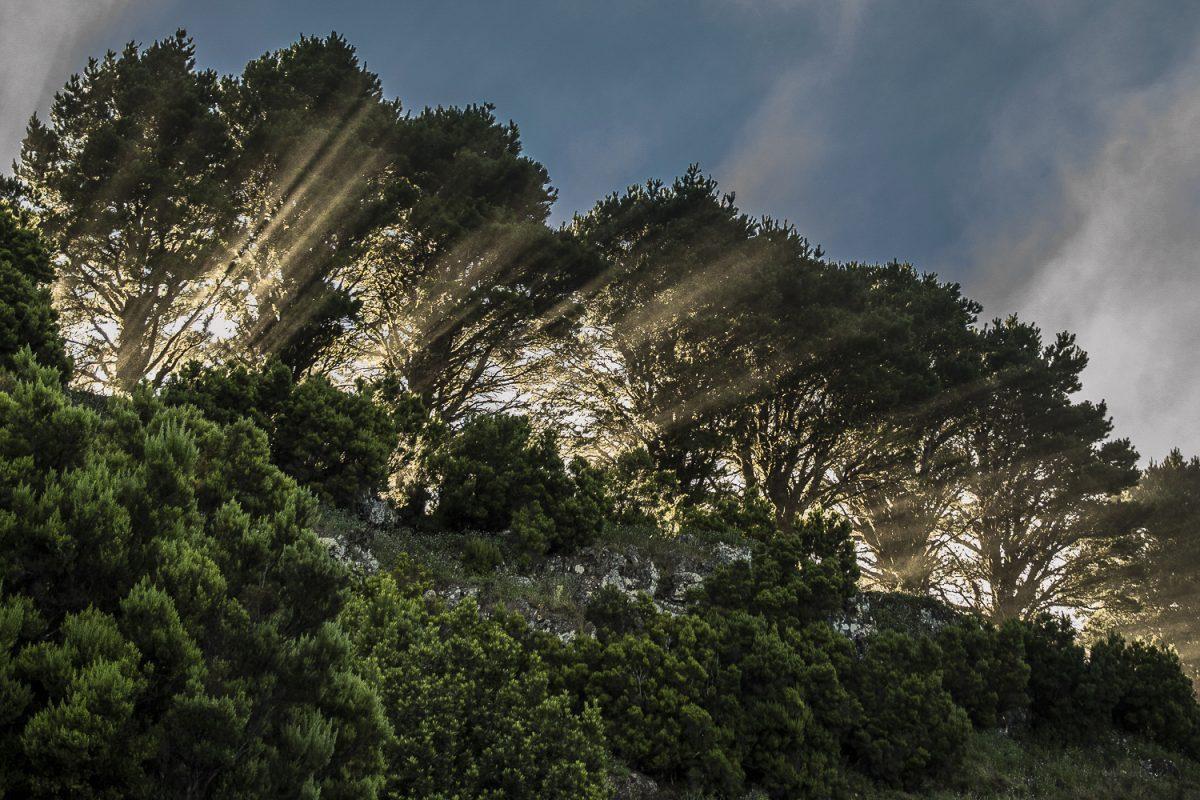 El Gobierno de Canarias y el Cabildo de El Hierro monitorizan hábitats de interés comunitario de la Isla