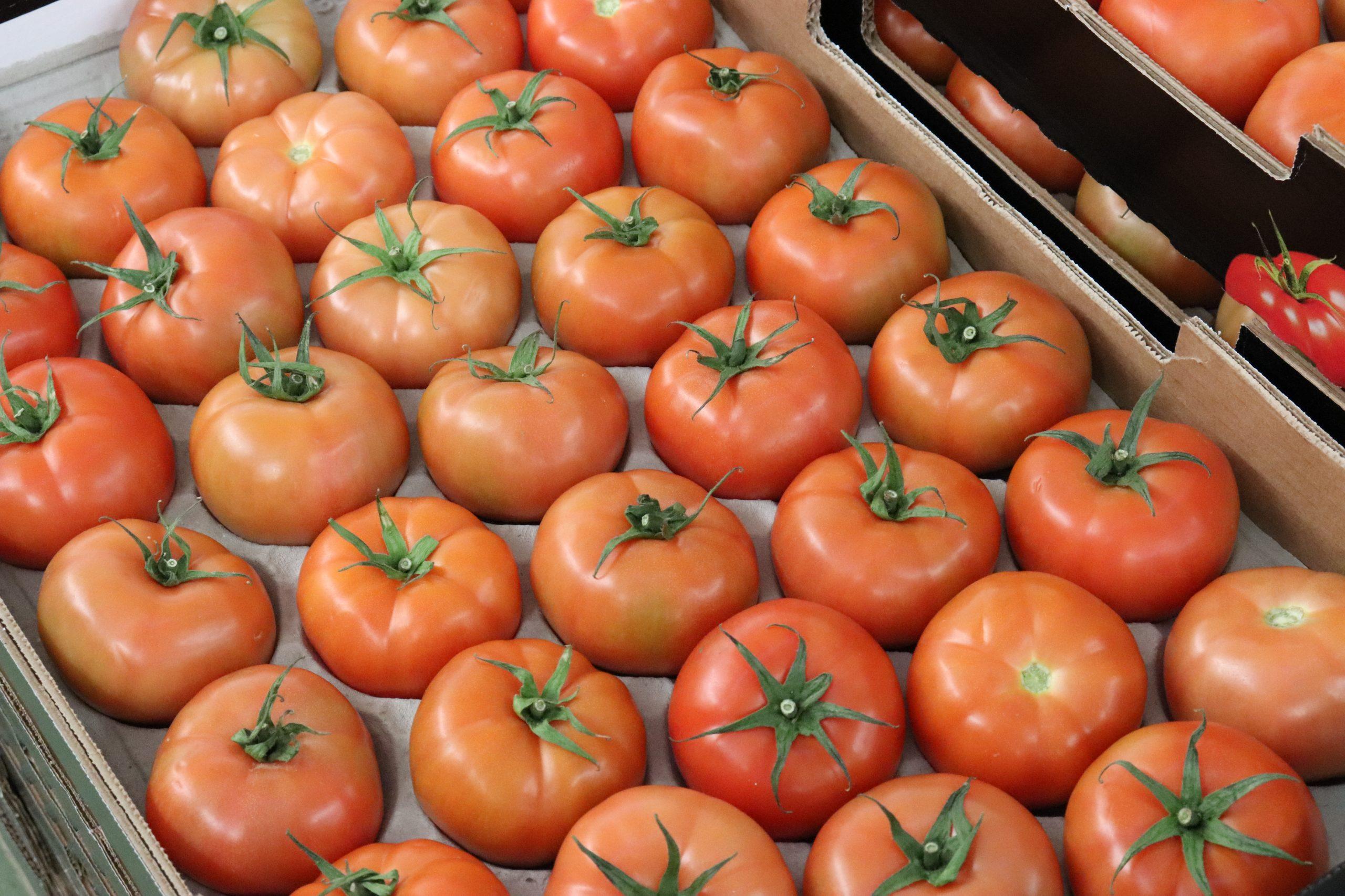 El Gobierno canario concede ayudas por 1,7 millones para el comercio exterior de tomate