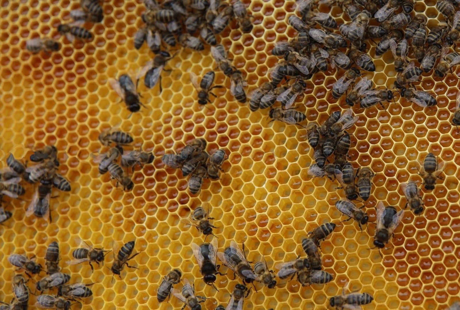 El sector apícola recibe 170.000 euros de ayuda del Gobierno canario