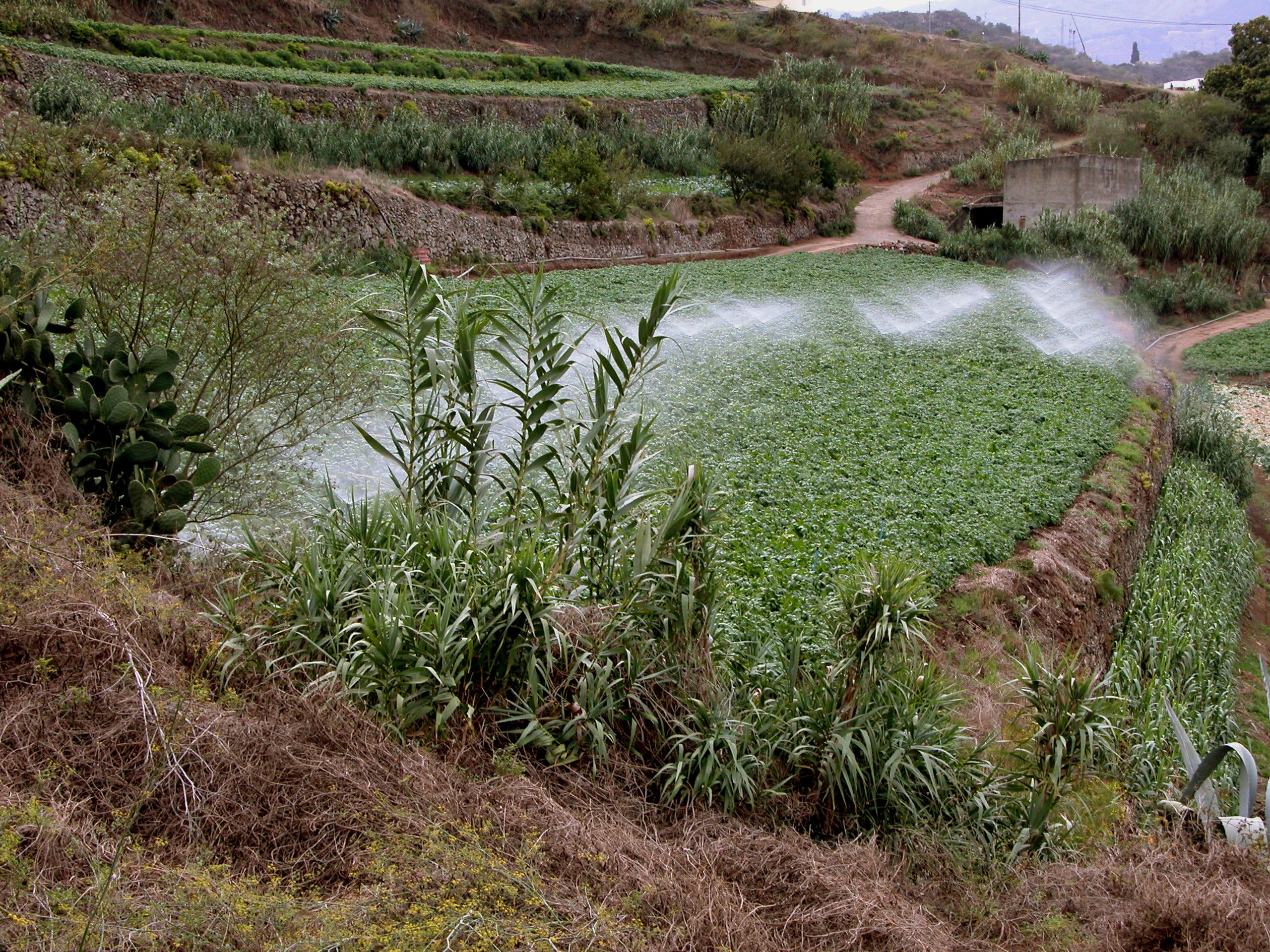 El Gobierno de Canarias convoca las ayudas al agua de riego por 8 millones de euros