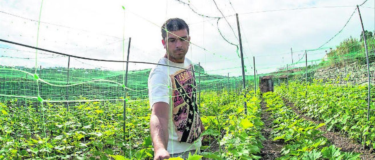 Canarias destina a los jóvenes agricultores 6,5 millones de euros