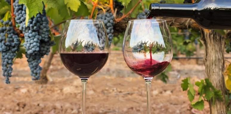 Ayudas destinadas a la medida de inversiones (sección 4ª) del programa de apoyo 2019-2023 al sector vitivinícola español