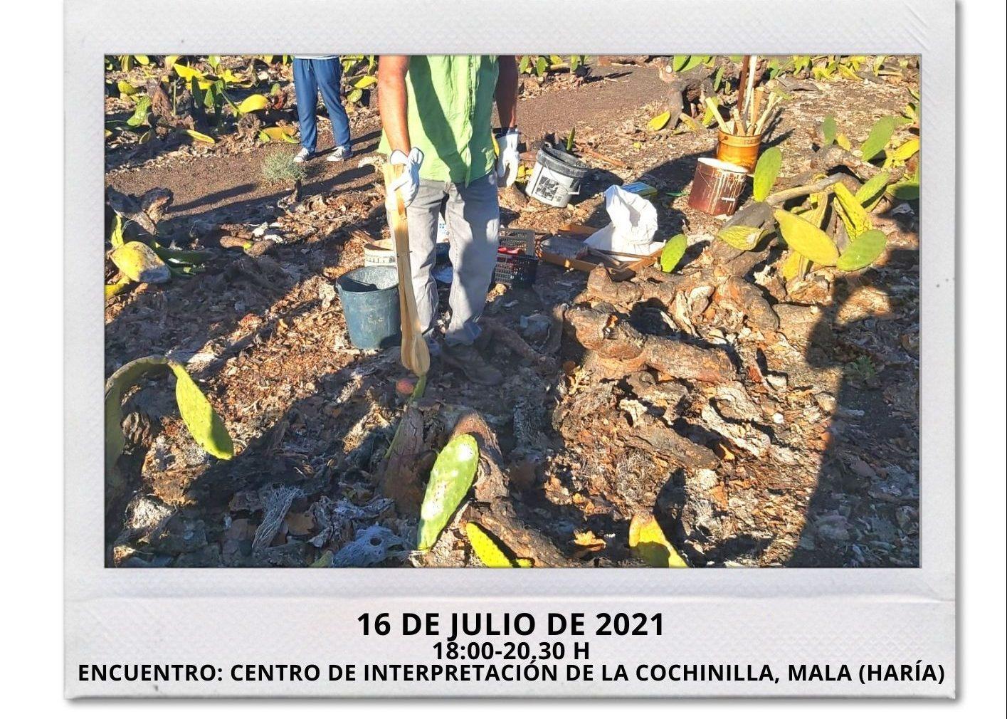 El Cabildo pone en marcha una nueva actividad de voluntariado de 'Junt@s somos biosfera'