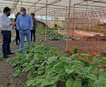 El Cabildo fomenta el cultivo de las fresas con el lanzamiento de una nueva campaña